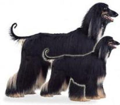 Южнокорейские ученые впервые клонировали собаку