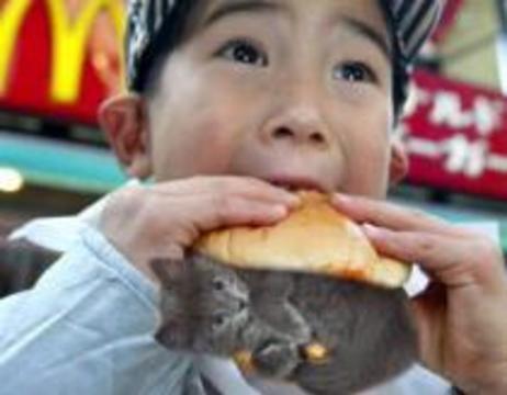 Из меню китайских ресторанов выгнали кошек