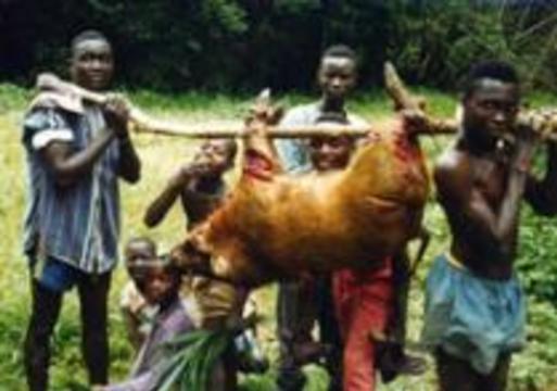 Европейцам запретят есть обезьян и слонов