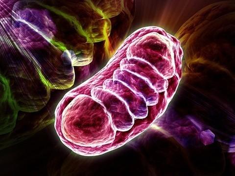 Ученые «починили» клетки с дефектной митохондриальной ДНК