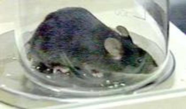Ученые научились восстанавливать поврежденный спинной мозг