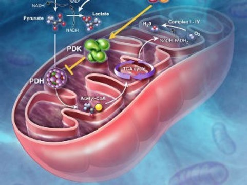 [Создана карта] человеческого метаболизма