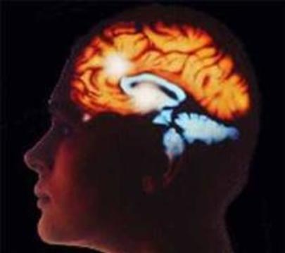 Жестокое поведение обусловлено анатомией мозга