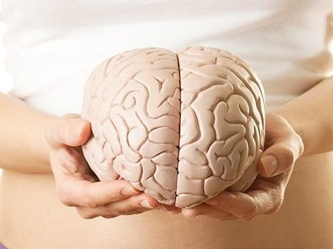 Интеллект не зависит от объема мозга