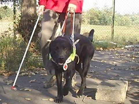 Московские инвалиды получат [льготы на лечение домашних животных]