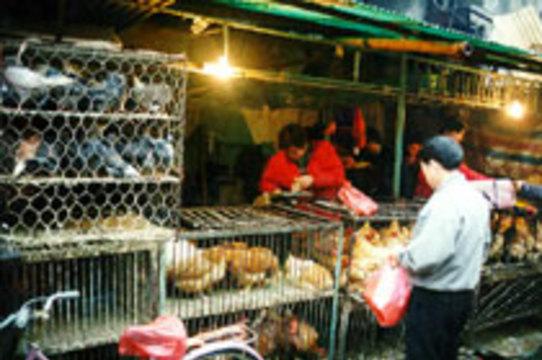 Власти Китая сообщают о десятом случае заражения человека птичьим гриппом