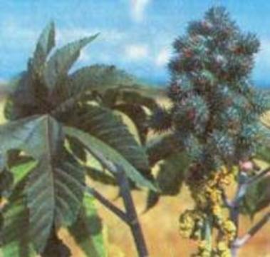 Хакасские школьники отравились травой