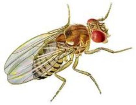 В Индии человека скрестили с мухой