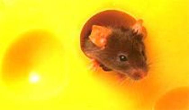 """""""Супер-мыши"""" не болеют раком"""