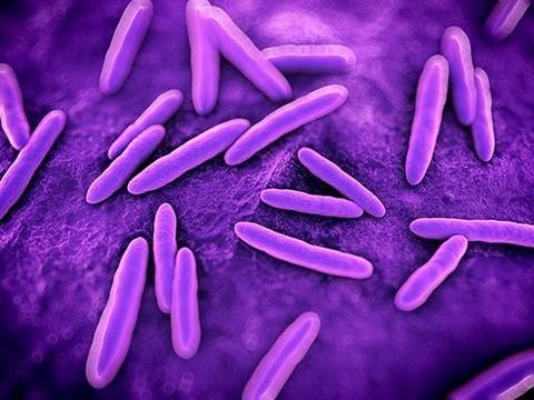 Металлические наночастицы против супербактерий