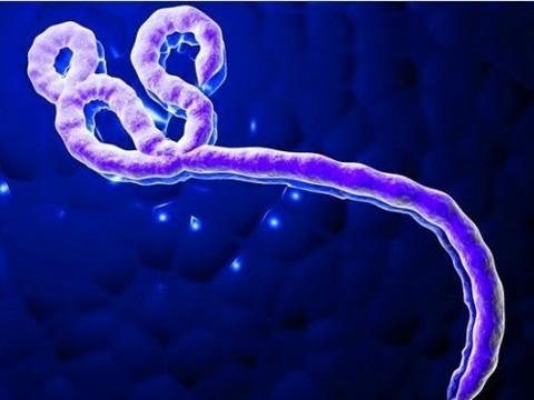 Вирус Эбола в сперме выживших [способен к заражению в течение трех месяцев]