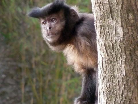 Не стреляйте в диких обезьян