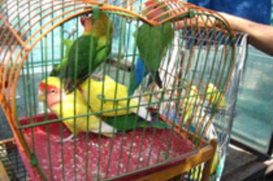 Контрабандные попугаи [заразили пограничников орнитозом]