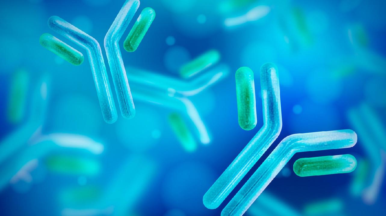 Иммунитет против SARS-CoV-2 может сохраняться благодаря «остаткам» вируса в организме