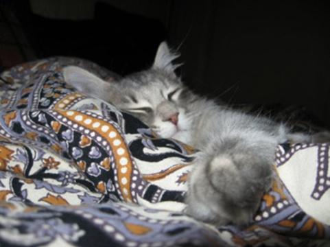 Ученые посоветовали [не пускать кошек в спальню]