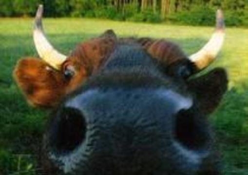 Родственники погибших от коровьего бешенства получат компенсацию