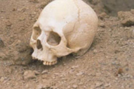 Первые стоматологи появились 9000 лет назад