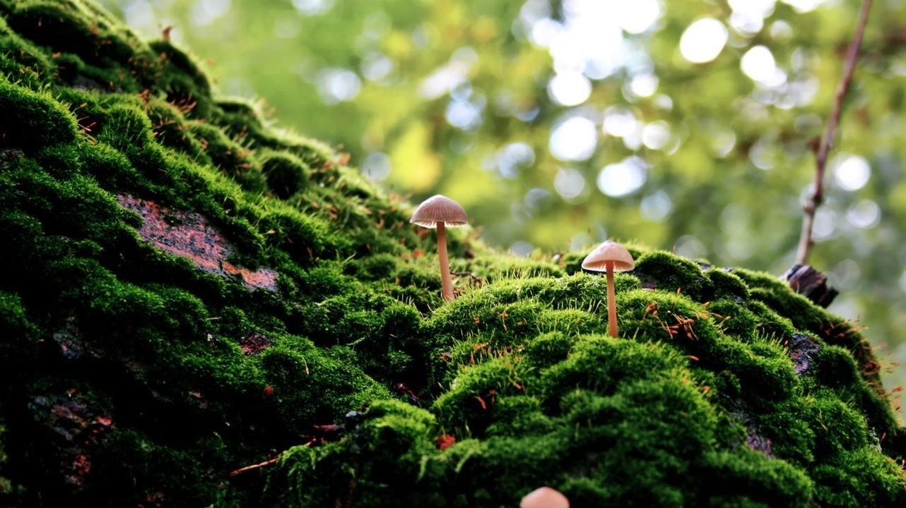Отравление грибами: грозные симптомы и первая помощь