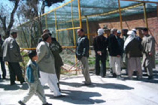 Единственная в Афганистане свинья [отправлена в карантин]