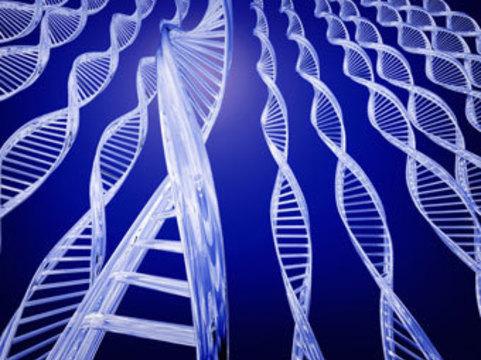 Координационный генетический совет. Запись пресс-конференции
