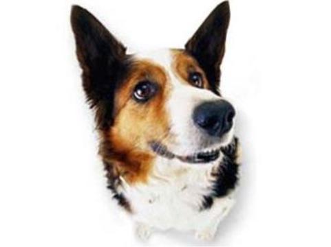 В 2009 году московские ветеринары [привили от бешенства 311 тысяч животных]
