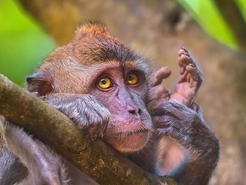 Китайские исследователи изучат аутизм на трансгенных обезьянах