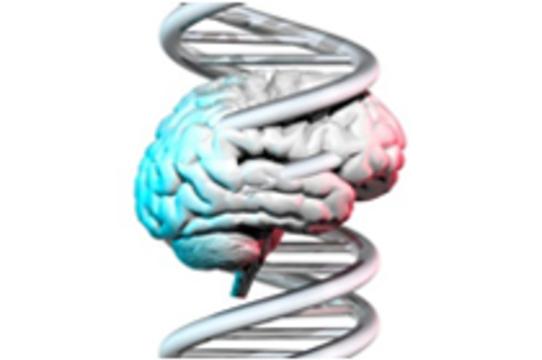 Генетическая мутация [улучшает память]