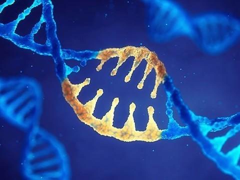 Генетики смогли омолодить человеческие клетки веществом из обычной еды