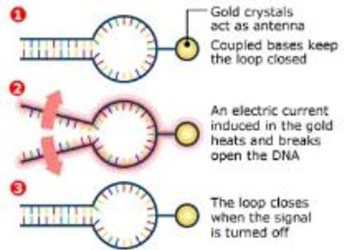 Гены можно включать и выключать по радио