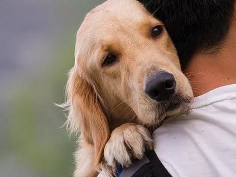 Приручение собак человеком негативно сказалось на их здоровье