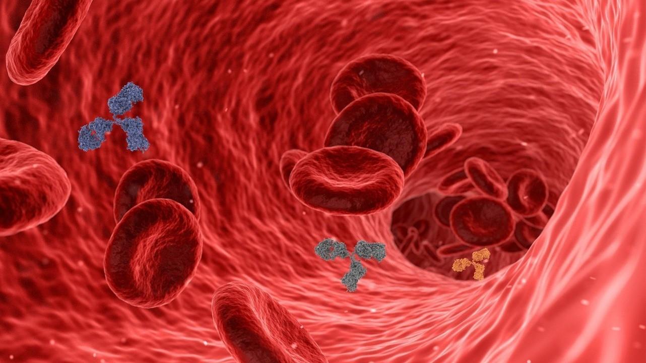Российские ученые обнаружили новые особенности выработки антител к коронавирусу