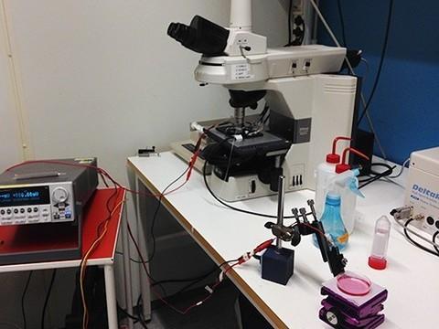 Ученые разработали аналог нейрона