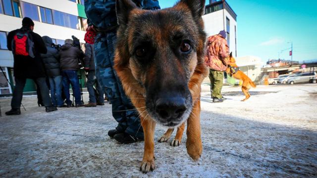 Золотые псы: кому выгодно рассказывать о «способности» собак выявлять COVID-19